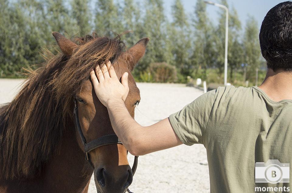Verslag paardencoach sessie Blend