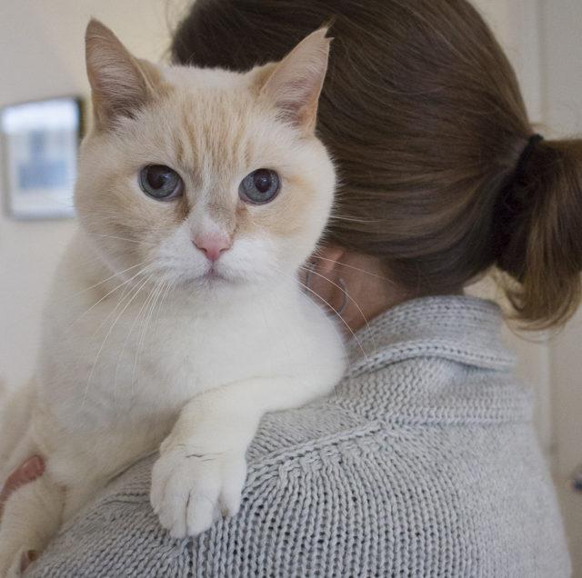 Katten fotografie: een fotoshoot met kat Karel