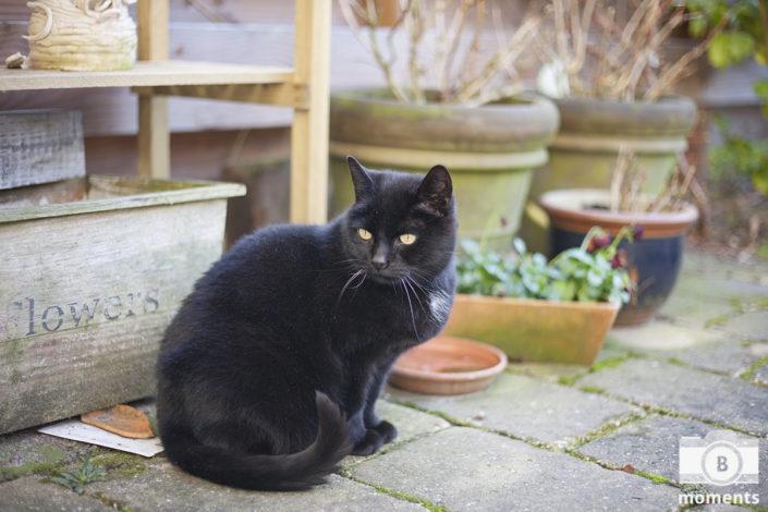 kattenfotografie, kat, poes, huisdier, fotografie, bmoments