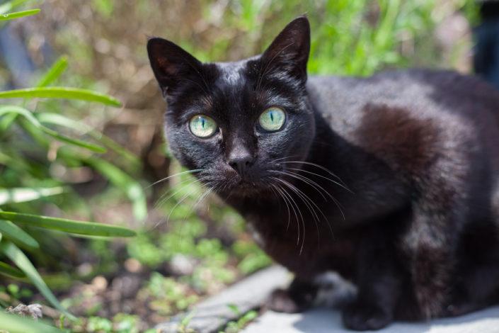 foto, kat, poes, huisdier, amsterdam, kattenfotografie, bmoments