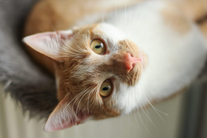 kat poes kattenfoto