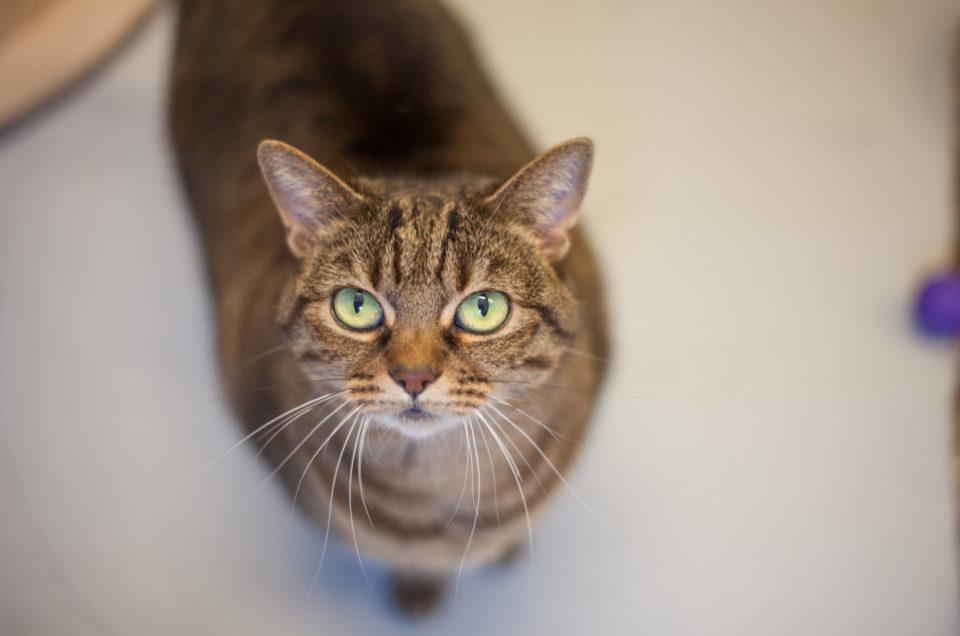 15 tips voor geweldige kattenfoto's