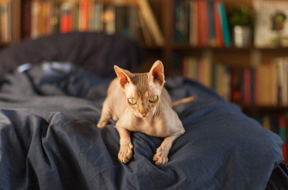 Lifestyle fotosessie thuis met twee katten