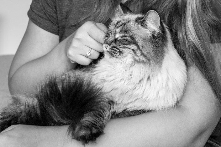 katten fotoshoot, katten fotografie, amsterdam
