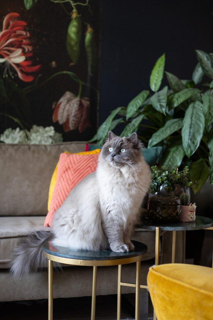 zakelijke foto's kat